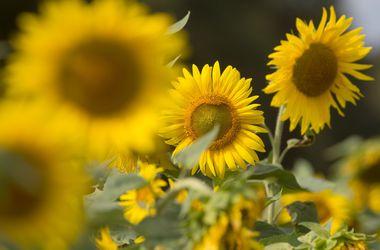 Синоптики обещают украинцам 30-градусную жару и дождь с грозой