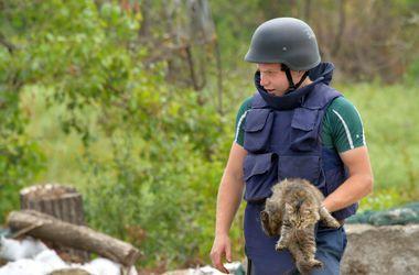 16 августа - Международный день защиты бездомных животных