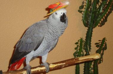 Киевский попугай спел популярную песню о Путине