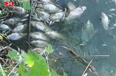 """В Днепропетровской области рыба """"сбегает"""" на сушу"""