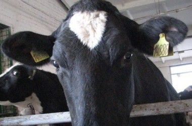 """Украина """"закрыла границу"""" для коз и коров из Македонии"""
