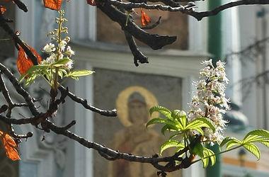 Специалисты объяснили, почему в Киеве осенью цветут каштаны