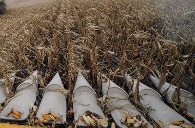 В Украине прогнозируют близкий к рекордному урожай, несмотря на потерю Крыма и войну