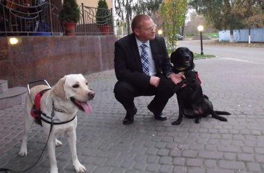 Как тренируют собак-поводырей