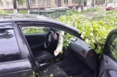 В Киеве из-за непогоды на легковушку рухнуло дерево
