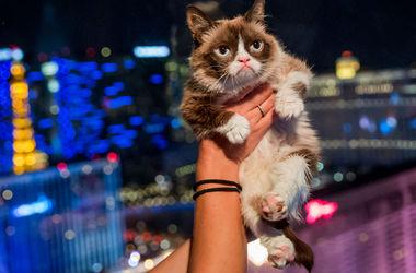 """Интернет-мем """"Сердитый кот"""" станет героем телефильма"""