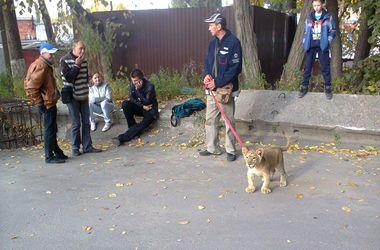 В Харькове выгуливают львенка на поводке и предлагают фото за деньги