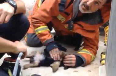 Испанский пожарник искусственным дыханием спас жизнь щенку