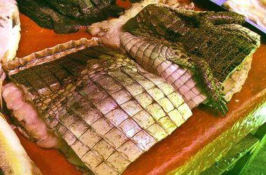 """Филиппинские крокодилы """"придут"""" на столы россиян"""