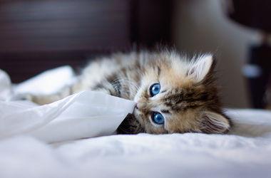 Украинцы греются в холодных квартирах теплыми вещами и котами