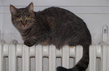Подключать столичные квартиры к теплу начнут уже завтра