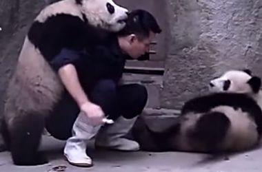 Панды, которые не хотят лечиться, взорвали Интернет