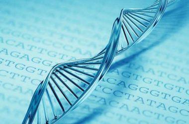 Ученые впервые в мире составили суточное расписание работы генов