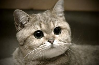 """Видео с """"застывшим"""" котом стало хитом Интернета"""
