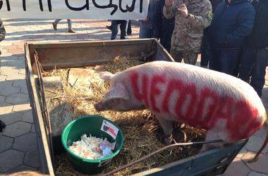 Под Одесскую ОГА подложили свинью