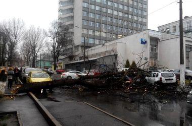 Упавшее в центре Киева дерево оказалось прогнившим каштаном