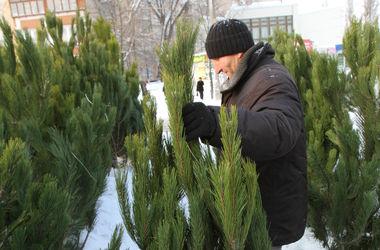 Какими будут цены на елки и новогодние украшения в Днепропетровске