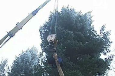 Главную новогоднюю елку Украины вывозили из леса в течение девяти часов