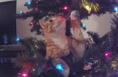Кошки против елок