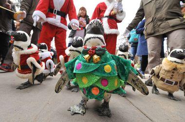 В Корее проходит парад пингвинов в костюмах новогодних елок