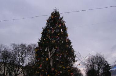 Главная елка Львова приехала из карпатских лесов, а украсили ее игрушками школьников