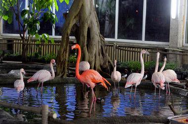 В киевском зоопарке открыли зимний птичник
