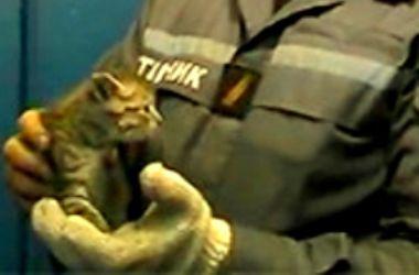 Киевские пожарные спасли маленького котенка