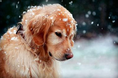 В Одессе в снежной ловушке оказались сотни бездомных собак и кошек