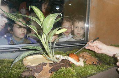 У Київському зоопарку показують незвичайних звірів