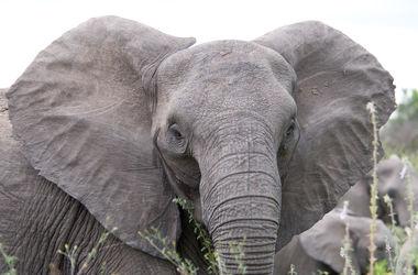 В Таиланде слон растоптал автомобиль туристов