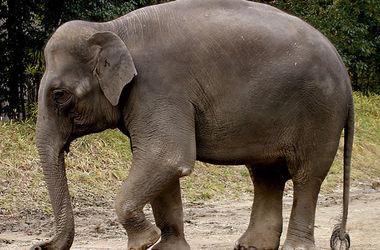 Харьковчанин лишился руки из-за слонихи