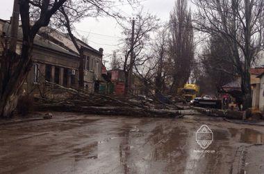 В Одессе сильный ветер за день повалил 13 деревьев