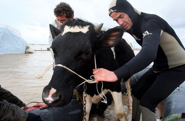 Наводнение в Албании: животных спасают на лодках, а людей вывозит армия