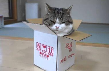 Ученые научно объяснили любовь котов к коробкам