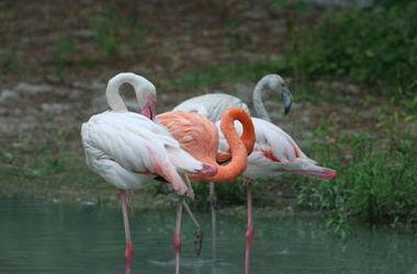 В Киевском зоопарке поселилась экзотическая птица