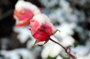 Завтра в Украине днем до +10, но с мокрым снегом