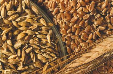 Урожай озимых будет ниже, чем в прошлом году - Кульбида