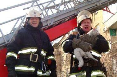 Киевские пожарные спасли из пылающей квартиры белого кота