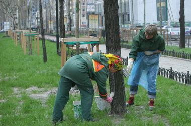 В Киеве высадят липы и рябины