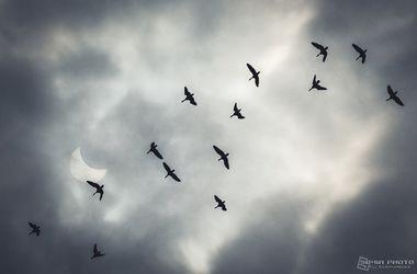 Как в Харькове наблюдали солнечное затмение