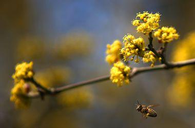 До Украины добралась весна. Завтра до +20
