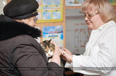 В Харькове ищут укушенных людей: из-за бешеного кота умер подросток