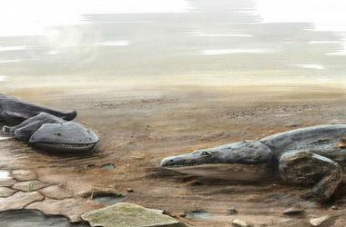 Ученые обнаружили древнюю амфибию размером с небольшой автомобиль