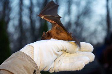 """В Feldman Ecopark состоится """"выпускной вечер""""  летучих мышей"""