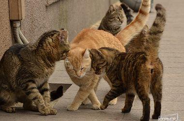 На Приморском бульваре Одессы обосновались дикие коты