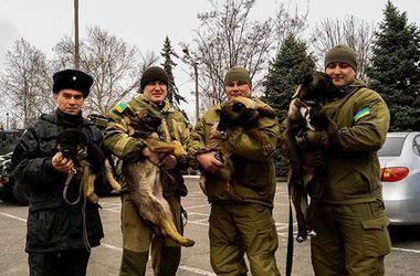 Одесские волонтеры подарили бойцам боевых щенков