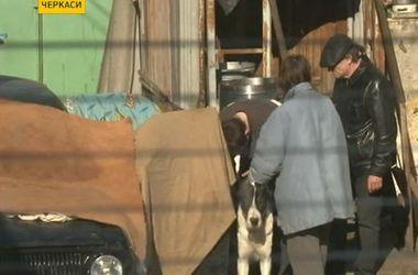 В Черкассах собаки соседей два года терроризируют молодую семью