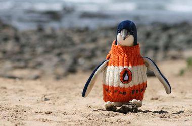 Спасти пингвина: свитера для пострадавших птиц вяжет весь мир
