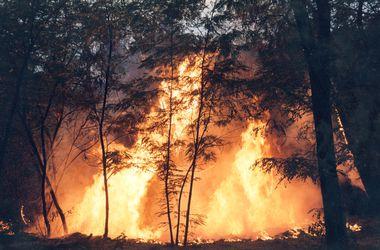 В столице создали штаб для ликвидации лесных пожаров