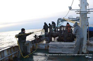 Под Одессой рыбаки-браконьеры убивали дельфинов